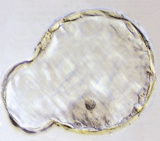 Partially hatched embryo