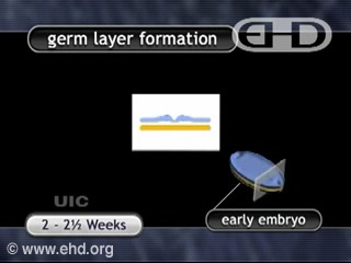 Play Movie - Germ Layers and Organ Formation