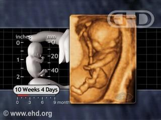 Prenatal Summary