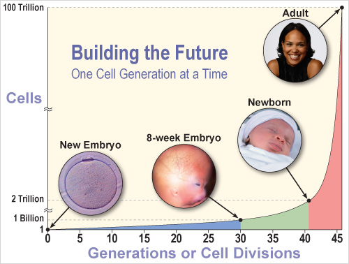 Cell Generations Graph