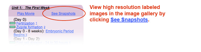 This image tells how to view high resolution labeled images in the timeline