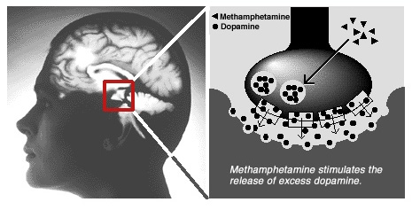 methamphetamine stimulates the release of excess dopamine.