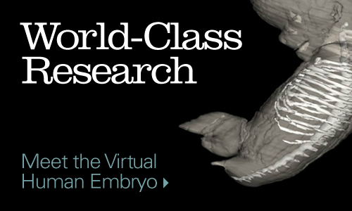 Meet the Virtual Human Embryo.