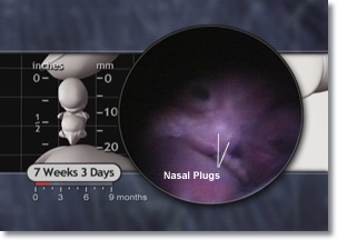 6 to 7 Weeks | Prenatal Overview