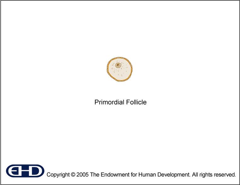 Labels  >> Figure 0.3 - Primordial Follicle [Unlabeled]