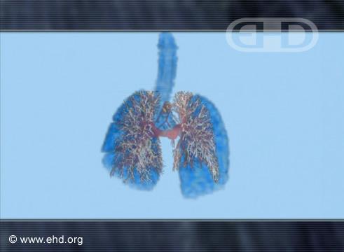 Comparación del desarrollo pulmonar [Haga clic para la siguiente imagen]
