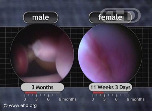 Genitales externos [Haga clic para la siguiente imagen]