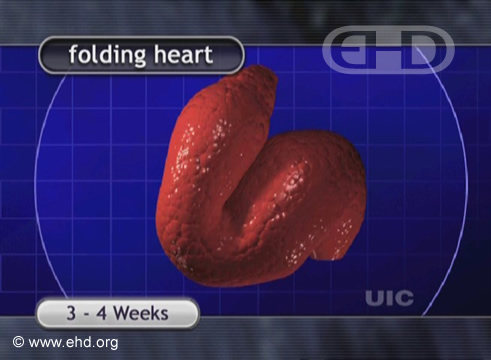 O Coração Dobradiço [Clique para a próxima imagem]