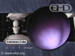 Reproducir película - Placas de las manos en forma de polígonos