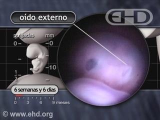 Reproducir película - El oído externo