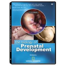 The Biology of Prenatal Development